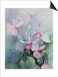 Fuschia, Pink Coachman Prints by Karen Armitage