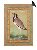 Indian Lapwing, C.1800 Prints by Ustad Mansur