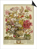 October, from 'twelve Months of Flowers' by Robert Furber (C.1674-1756) Engraved by Henry Fletcher Prints by Pieter Casteels