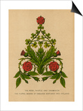 The Rose, Thistle and Shamrock. The Floral Badges of England, Scotland and Ireland Print by  English School