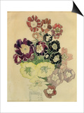 Polyanthus, Walberswick, 1915 Poster by Charles Rennie Mackintosh