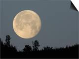 Full Moon over Ridge Kamloops, British Columbia Posters by Arthur Morris