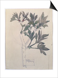 Elder, Walberswick, 1915 Prints by Charles Rennie Mackintosh