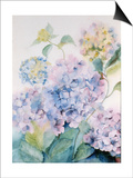 Hydrangea, Blue Wave I Print by Karen Armitage