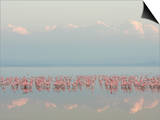 Lesser Flamingos, Phoenicopterus Minor, in Lake Nakuru, Kenya, Africa Print by Arthur Morris