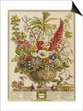 December, from 'twelve Months of Flowers' by Robert Furber (C.1674-1756) Engraved by Henry Fletcher Print by Pieter Casteels