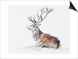 Seated Stag, 2006 Prints by Mark Adlington