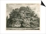 The Chandos Oak, Michendon House, Southgate, London Posters by Jacob George Strutt