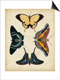 Display of Butterflies III Print by  Vision Studio