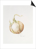 Onion Study, 1993 Prints by Alison Cooper