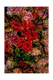 Red Flowers Giclee Print by Andre Burian