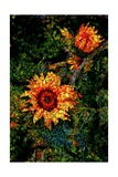 Sunflowers Giclee Print by Andre Burian