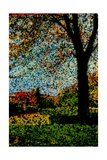 Park Giclee Print by Andre Burian