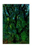 Green Giclee Print by Andre Burian