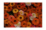 Flowers Giclee Print by Andre Burian