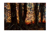 Trees Giclee Print by Andre Burian