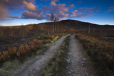 Dirt Road through Moorland, Cairngorms National Park, Scottish Highlands, Scotland Photographic Print by Jason Friend