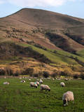 Sheep Grazing in Peak Photographic Print by Michelle McMahon