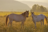 Backlighted Couple of Horses Photographic Print by Teo Barker