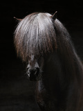 Portrait of Stallion Photographic Print by  Arctic-Images