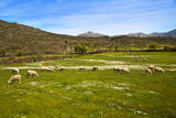 Dehesa, Typical Pasture of Extremadura. Photographic Print by Gonzalo Azumendi