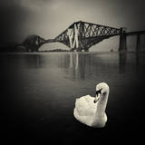 Swan with Forth Bridge at Background Photographic Print by Chee Seong