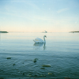 Swan and Ferry Photographic Print by Eivind Oskarson