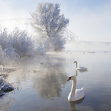 Icy Swan Lake Photographic Print by E.M. van Nuil
