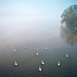 Swans in Log on River Neckar Photographic Print by Ulrich Mueller