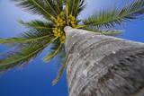 Dollia  Sheombar - Palm Tree Fotografická reprodukce