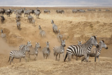 Ngorongoro Crater Conservation Area, Tanzania Photographic Print by William Manning