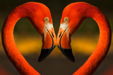 Flamingos with Heart Shaped Necks Photographic Print by VAILLANCOURT PHOTOGRAPHY