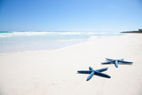 Two Blue Starfish on Tropical Beach Photographic Print by  Lulu