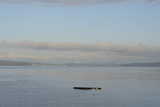 An Empty Dock Floating in the Puget Sound Photographic Print by Aaron McCoy
