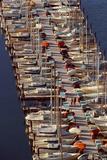 Sailboats at Moorage Photographic Print by Harald Sund