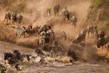 Wildebeest and Zebra Photographic Print by  Marsch1962UK