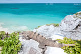 Iguana on Rock Photographic Print by M Swiet Productions