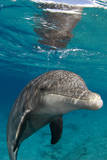 Captive Dolphins Photographic Print by Luis Javier Sandoval