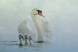 Swan Family Photographic Print by Betty Wiley