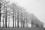 Trees in Row Photographic Print by  michaeliao27