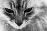 Cat Reprodukcja zdjęcia autor Joelle Icard