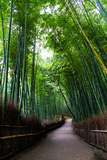 Sagano Bamboo Forest Photographic Print by Shenghung Lin Photos