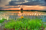 Rice Field at Dusk Photographic Print by The landscape of regional cities in Japan.