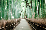 Bamboo Forest Photographic Print by Milton Correa