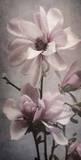 Magnolia Memories 2 Prints by Julie Greenwood