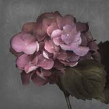 From My Garden 2-Gray Prints by Julie Greenwood