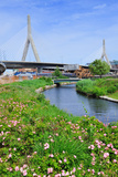 Boston Leonard P. Zakim Bunker Hill Memorial Bridge with Blue Sky in Park with Flower as the Famous Prints by Songquan Deng