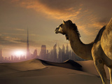 Camel and Futuristic City in a Desert Photographic Print by Buena Vista Images