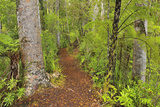 Forest Trail Photographic Print by Raimund Linke