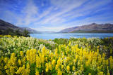 Lake Wakatipu Fotografisk tryk af Thienthongthai Worachat